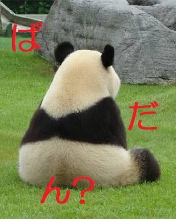 パンダの背中調査員